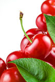 Sour cherry on white background. Royalty Free Stock Photos