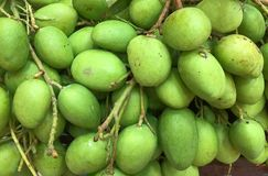 Sour Green Mangoes Background. Fresh Sour Green Mangoes Background Stock Images