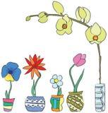 source colorée de fleurs Photos libres de droits