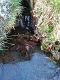 Source d'eau photographie stock libre de droits