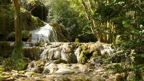 Source d'eau pure de la forêt 4K - 6 de montagne banque de vidéos
