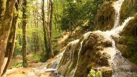 Source d'eau pure de la forêt 4K - 10 de montagne banque de vidéos