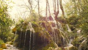 Source d'eau pure de la forêt 4K -11 de montagne banque de vidéos