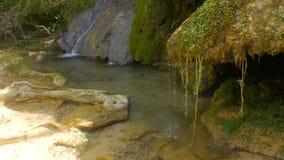 Source d'eau pure de la forêt 4K - 13 de montagne banque de vidéos