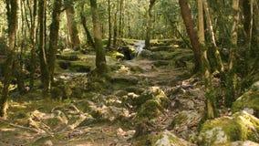 Source d'eau pure de la forêt 4K - 18 de montagne banque de vidéos