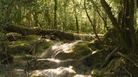 Source d'eau pure de la forêt 4K - 19 de montagne banque de vidéos