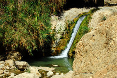 Source d'Ein Gedi Images stock