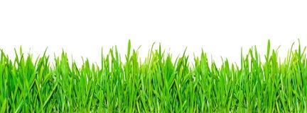 source d'herbe images libres de droits