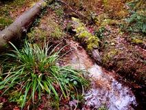 Source d'une rivière Images stock