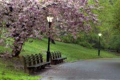 Source dans Central Park Photographie stock