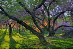 Source dans Central Park Images libres de droits