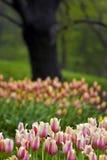 Source dans Central Park Photos stock
