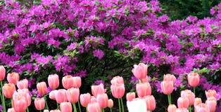 Source dans Central Park Photo stock