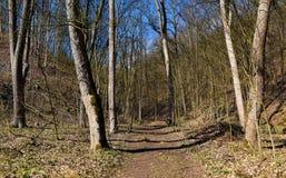 Source dans la forêt Images stock