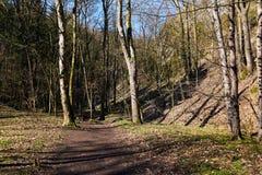 Source dans la forêt Photo stock