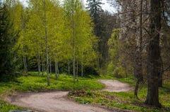 Source dans la forêt Photo libre de droits