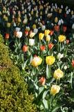 Source dans le jardin 1 Images libres de droits