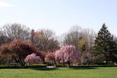 Source dans le jardin 17 Photo libre de droits