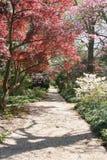 Source dans le jardin Photographie stock