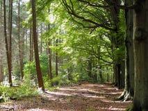 Source dans les bois Photo stock