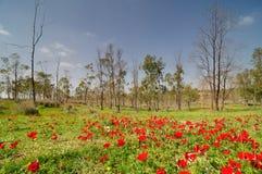 Source dans un désert du Néguev est de floraison Photo stock