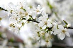 Source de fleur Photographie stock