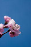 Source de fleur Images libres de droits