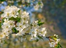 source de fleur Image stock