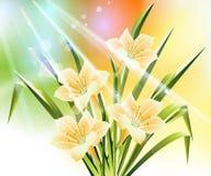 source de fleur de fond Photographie stock