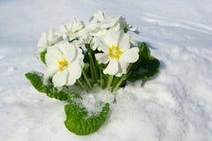 source de fleurs Image stock