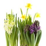 source de fleurs Photographie stock libre de droits
