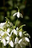 source de fleurs Images libres de droits