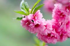 Source de floraison Photos stock