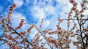 Source de floraison photo stock