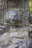 Source de lion Photographie stock