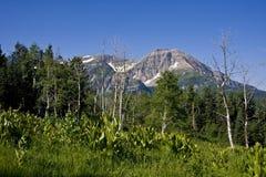 Source de montagne Image libre de droits