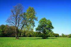 Source des arbres Photographie stock