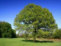 Source des arbres Images stock