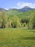 Source du Colorado photo stock
