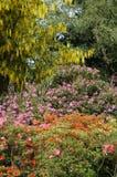 Source en fleur Image libre de droits