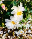 Source en fleur photographie stock