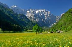 Source en vallée alpestre Photographie stock