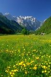 Source en vallée alpestre images stock