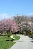 Source fleurissant dans le jardin photo stock