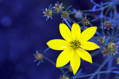 Source jaune photographie stock libre de droits