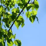 Source. Lames et ciel de vert image libre de droits