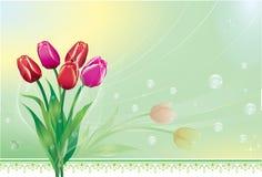 source lumineuse de fleurs Image stock
