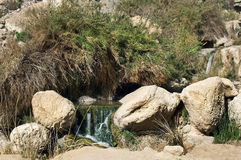 Source of mineral water. Of Ein Gedi, near the Dead Sea, Israel Royalty Free Stock Images