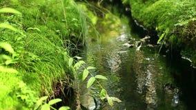 Source pure water. Sunlit, loop stock video