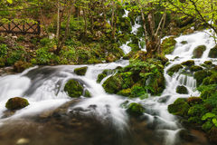 River spring with cascade in the forest Stock Image
